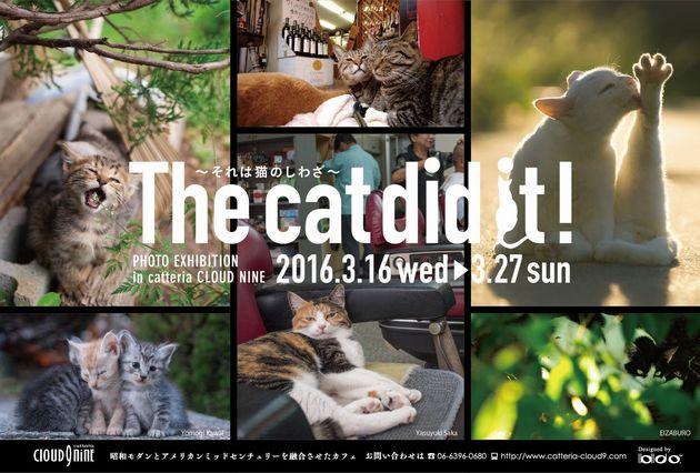 the cat di dit! それは猫のしわざ